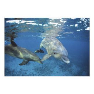 México, Cozumel. Delfín de Bottlenosed, Tursiops Fotografía