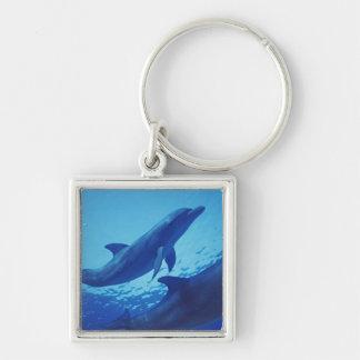 México, Cozumel. Delfín de Bottlenosed, Tursiops Llavero Cuadrado Plateado