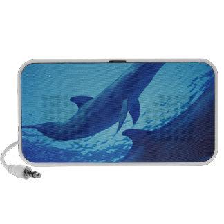 México, Cozumel. Delfín de Bottlenosed, Tursiops PC Altavoces