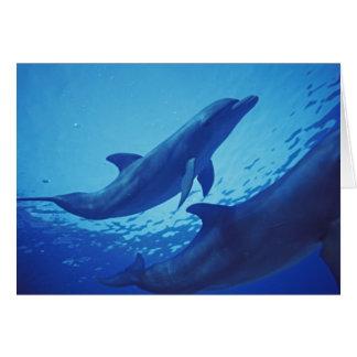 México, Cozumel. Delfín de Bottlenosed, Tursiops Tarjeta De Felicitación