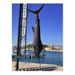 Mexico Marlin Post Card