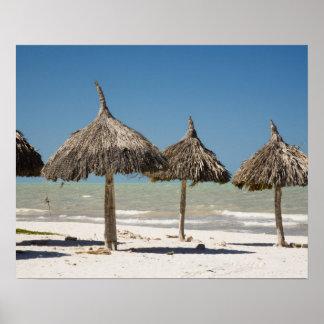 México, península del Yucatán, Progreso. Paja Póster