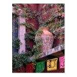 Mexico, San Miguel de Allende, Ivy, clay pot, Post Cards