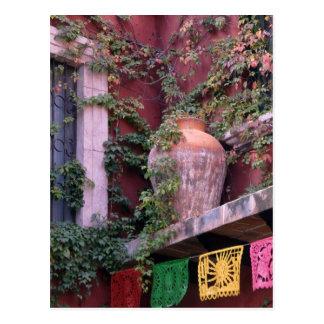 Mexico, San Miguel de Allende, Ivy, clay pot, Postcard