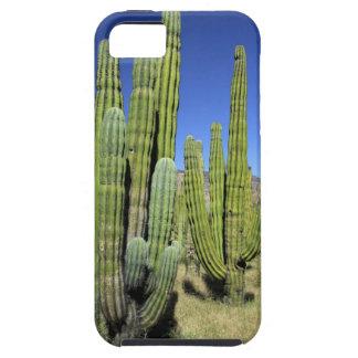 Mexico, Sonora, San Carlos. Saguaro & Organ Pipe iPhone SE/5/5s Case