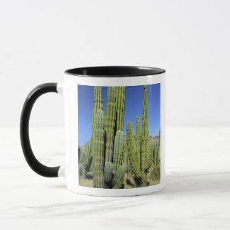 Mexico, Sonora, San Carlos. Saguaro & Organ Pipe Mug