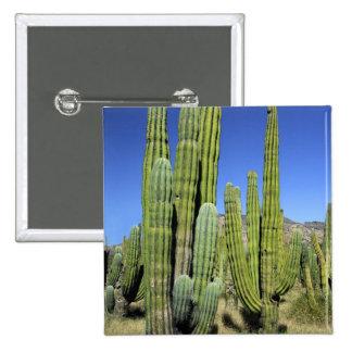 Mexico, Sonora, San Carlos. Saguaro & Organ Pipe Pinback Button