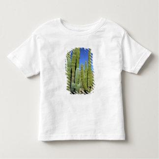 Mexico, Sonora, San Carlos. Saguaro & Organ Pipe Shirt