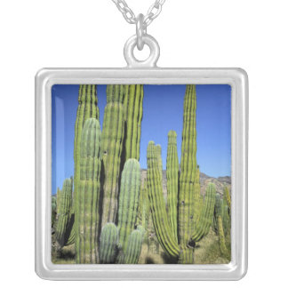 Mexico, Sonora, San Carlos. Saguaro & Organ Pipe Silver Plated Necklace