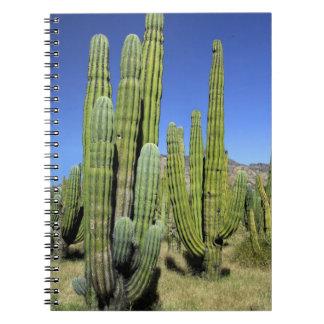 Mexico, Sonora, San Carlos. Saguaro & Organ Pipe Spiral Notebook