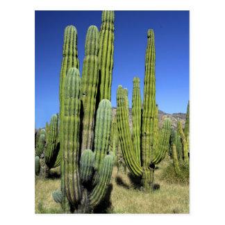 México, Sonora, San Carlos. Tubo del Saguaro y de Postales