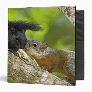 Mexico, Tamaulipas State. Both color phases of 3 Ring Binder