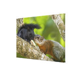 Mexico, Tamaulipas State. Both color phases of Canvas Print