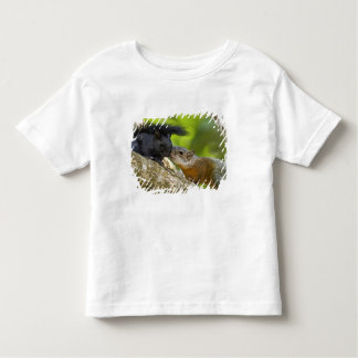 Mexico, Tamaulipas State. Both color phases of Toddler T-shirt