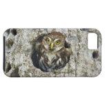 Mexico, Tamaulipas State. Ferruginous pygmy owl iPhone 5 Case