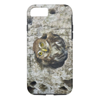 Mexico, Tamaulipas State. Ferruginous pygmy owl iPhone 7 Case