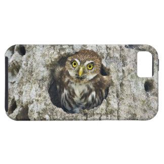 Mexico, Tamaulipas State. Ferruginous pygmy owl iPhone SE/5/5s Case