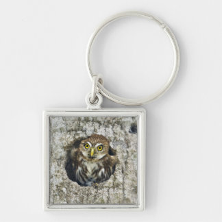 Mexico, Tamaulipas State. Ferruginous pygmy owl Keychain