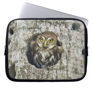 Mexico, Tamaulipas State. Ferruginous pygmy owl Laptop Sleeves