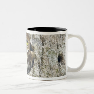 Mexico, Tamaulipas State. Ferruginous pygmy owl Two-Tone Coffee Mug
