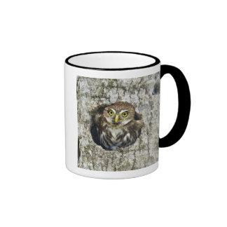 Mexico, Tamaulipas State. Ferruginous pygmy owl Ringer Coffee Mug