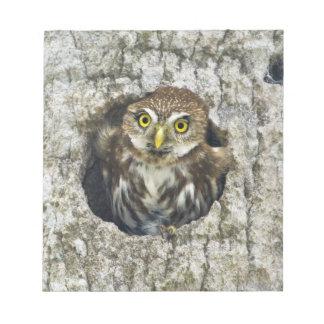 Mexico, Tamaulipas State. Ferruginous pygmy owl Note Pad