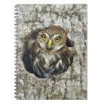 Mexico, Tamaulipas State. Ferruginous pygmy owl Spiral Note Book