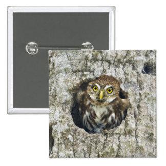 Mexico, Tamaulipas State. Ferruginous pygmy owl Pinback Button