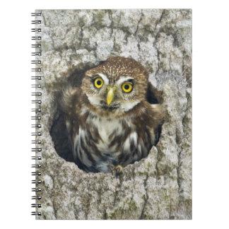 Mexico, Tamaulipas State. Ferruginous pygmy owl Spiral Notebook