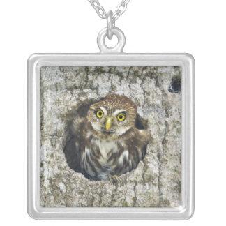 Mexico, Tamaulipas State. Ferruginous pygmy owl Square Pendant Necklace