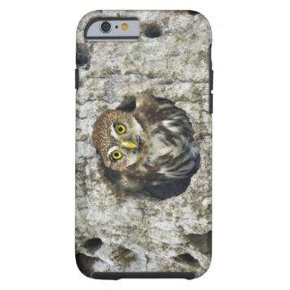 Mexico, Tamaulipas State. Ferruginous pygmy owl Tough iPhone 6 Case
