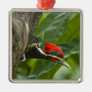 Mexico, Tamaulipas State. Male lineated Square Metal Christmas Ornament