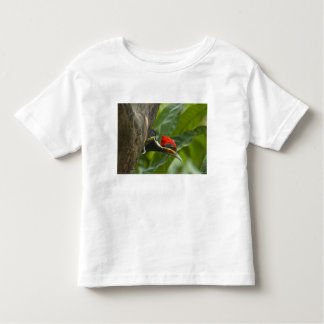 Mexico, Tamaulipas State. Male lineated T-shirts