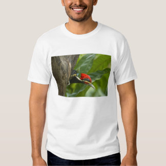 Mexico, Tamaulipas State. Male lineated Tee Shirt