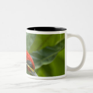 Mexico, Tamaulipas State. Male lineated Two-Tone Coffee Mug