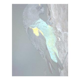 Meyer's Parrot Letterhead