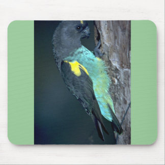 Meyer's Parrot Mouse Pad