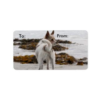 Mezcla de Jack Russell Terrier - Winnie - Omán Etiqueta De Dirección