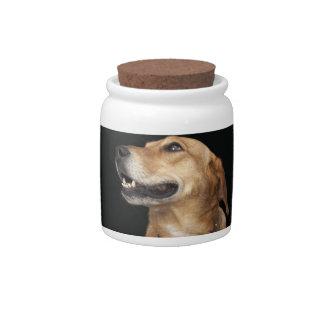 Mezcla de oro del laboratorio del beagle que mira  plato para caramelo