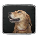 Mezcla de oro del laboratorio del beagle que mira  manga de iPad