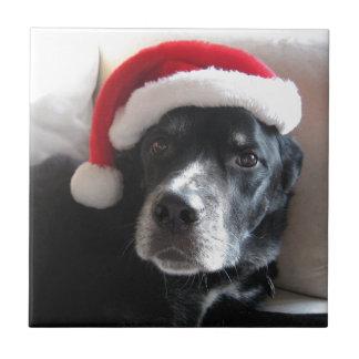 Mezcla de Santa Perro-Labrador Rottweiler Azulejo Cuadrado Pequeño
