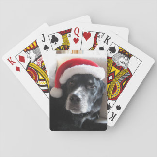 Mezcla de Santa Perro-Labrador Rottweiler Barajas De Cartas