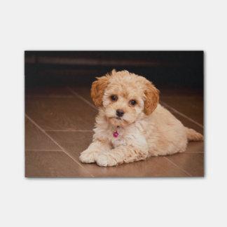 Mezcla del caniche del bebé o perro de perrito notas post-it