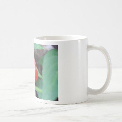 Mezcla del jardín de la pimienta taza