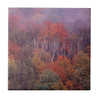 Mezcla del otoño de los árboles de la naturaleza azulejos ceramicos