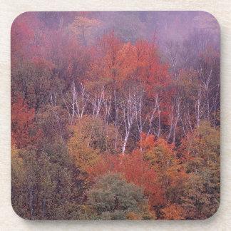 Mezcla del otoño de los árboles de la naturaleza posavasos de bebida