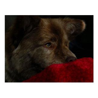 mezcla del perro chino con la postal del corazón