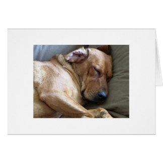 Mezcla del perro de Rhodesian Ridgeback Labrador Tarjeta Pequeña