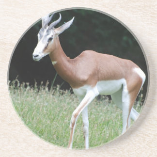 Mhorr Gazelle Coaster