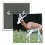 Mhorr Gazelle Pin